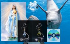 7041528-dolphin-swarm-640x400